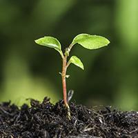Die 5 Wege des Wachstums